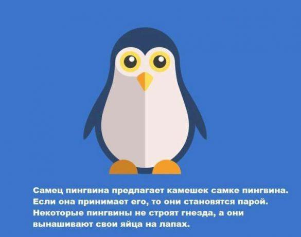1441865644_6