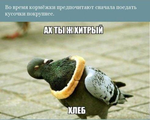 1411324554_8